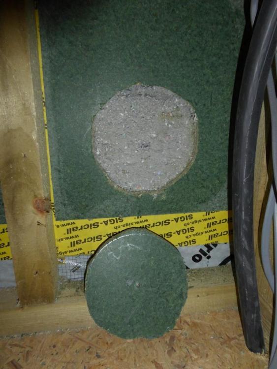 252433450_Holeininnerwall-cellulose.thumb.JPG.8b0d448490aaac3e0629a91032ab3e28.JPG